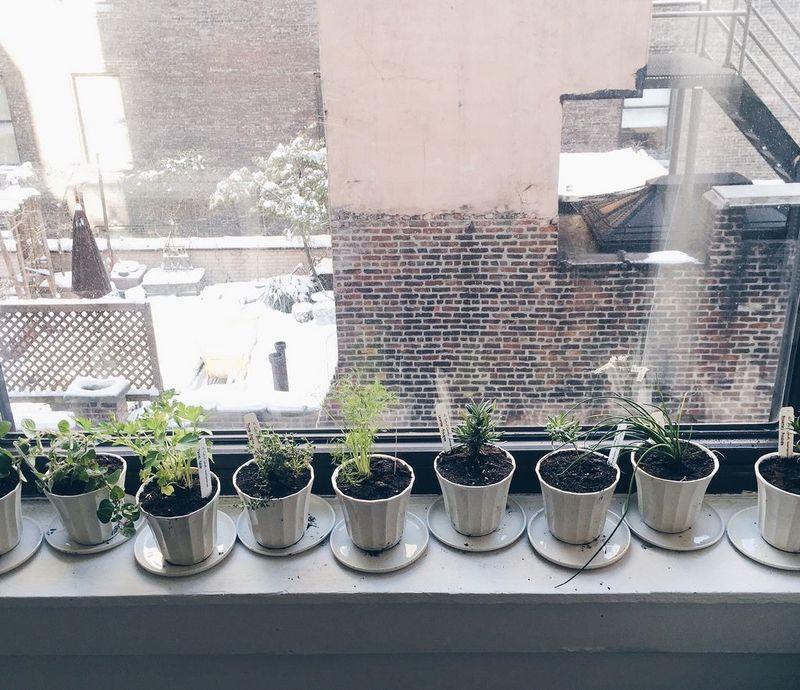 Food52's herb garden of 2015.