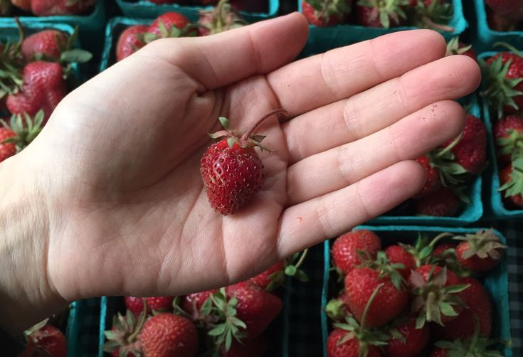 10 Fruits & Vegetables That Are Cuter Than Your Kids