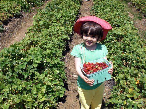 Daughter picking strawberries