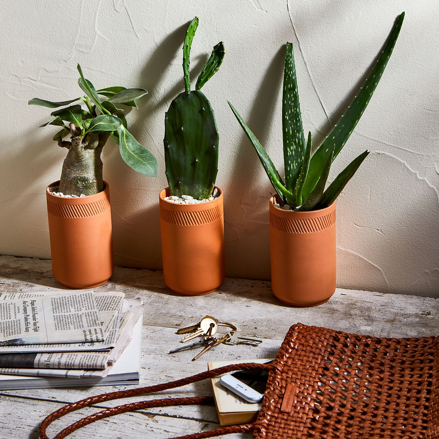 Modern Sprout Terra Cotta Indoor Grow Kits Set Of 3 On Food52