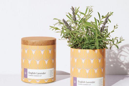 Waxed Garden Planter Grow Kit
