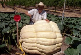 Meet the Man With a Gift for Growing Giant Pumpkins