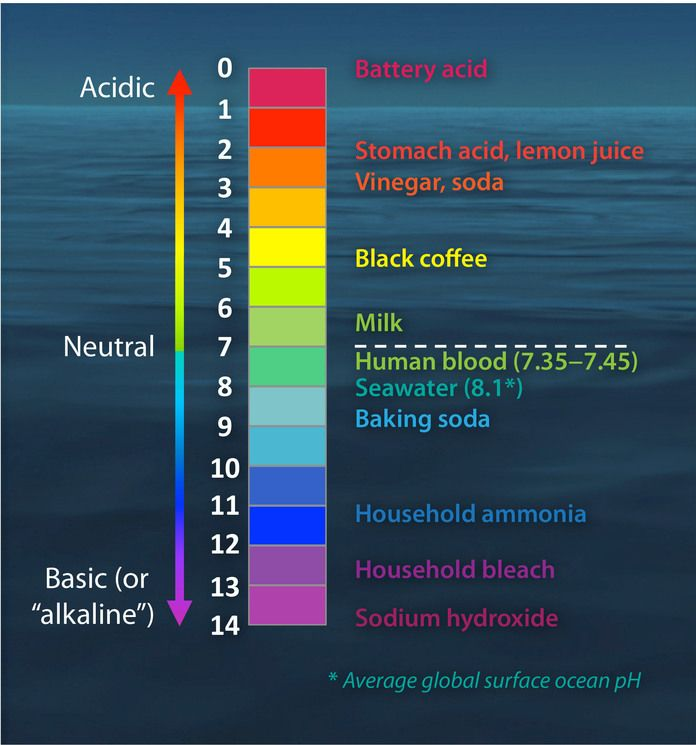 The pH scale, and where some common items fall on it.