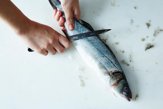 How to Scale and Gut a Fish