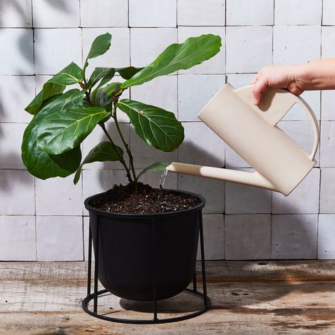 The Hadron Watering Can