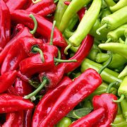 2d92f7ad 99fa 44ec ba0e 725a0d6b6ade  red green chili peppers