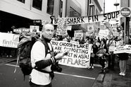 What's Wrong with Banning Shark Fin Soup?