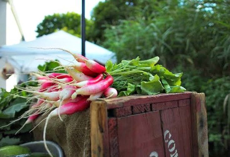 Aw Snaps: Ravishing Radishes