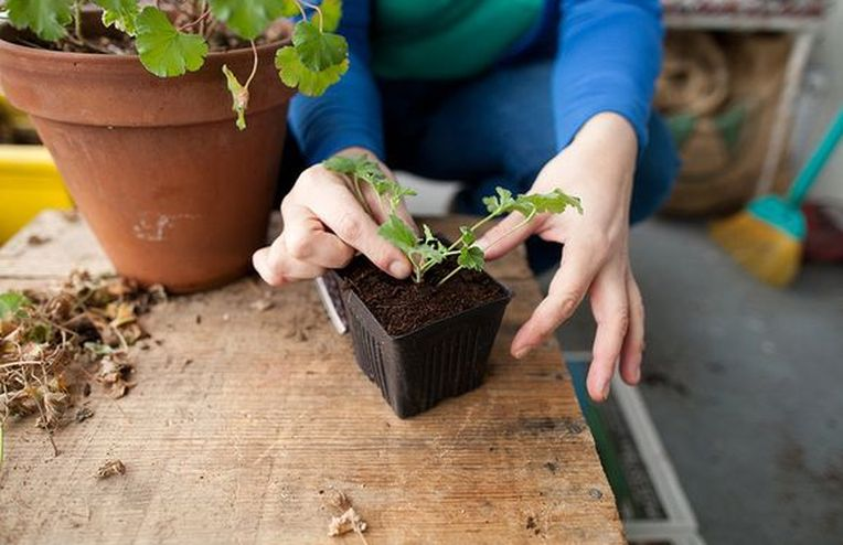Sharing is Caring: Propagating Herbs