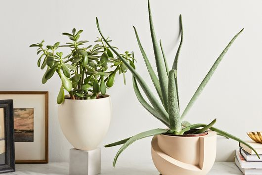 The 7 Best Plant Gifts to Give a Friend. Any Friend.
