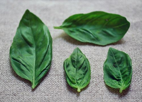 Your Best Recipe Using Fresh Basil