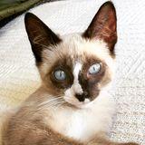 Artcat