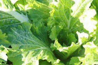 Potato Greens Soup Recipe On Food52