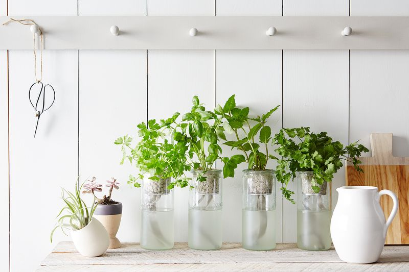 Indoor Gardening   Bring The Outdoors In