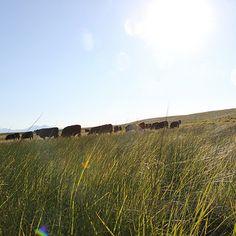 Grass-fed Beef Tartare