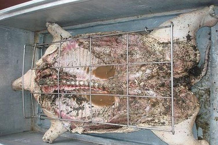 Caja China Cajun Microwave Cuban Pig Roast Recipe