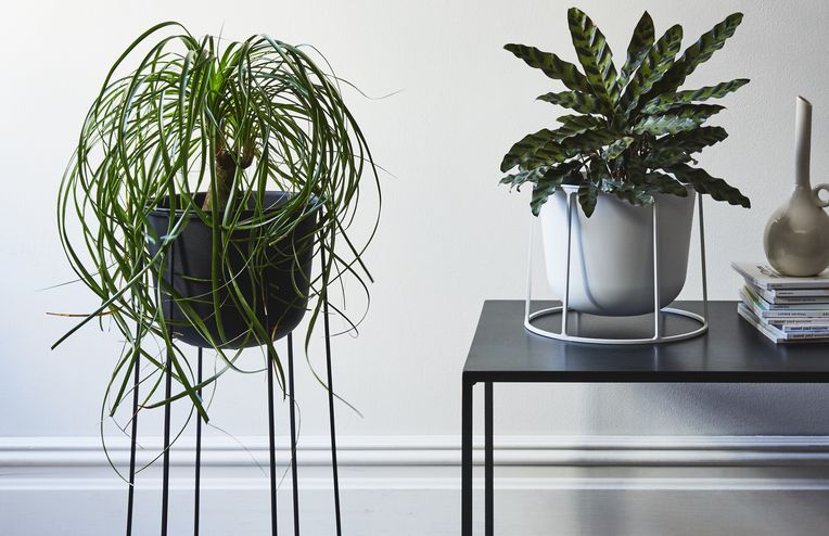 5 Indoor Plants You'll Want to Bring Home, Stat
