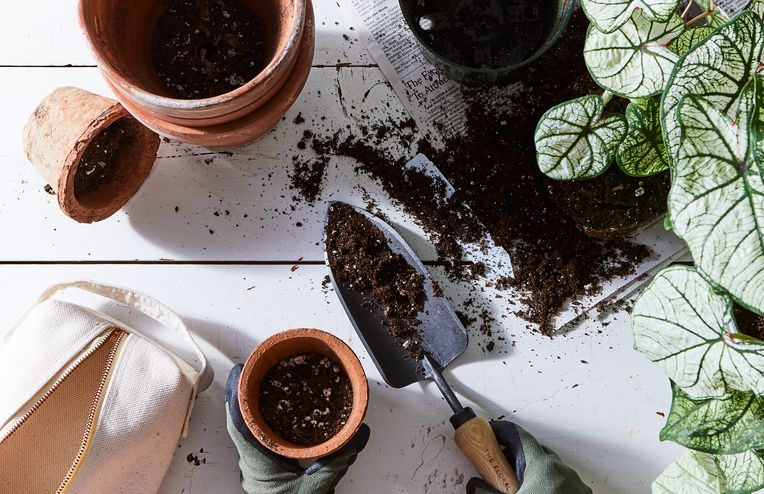 How to Bring Your Plants Indoors (& Keep Them Alive)