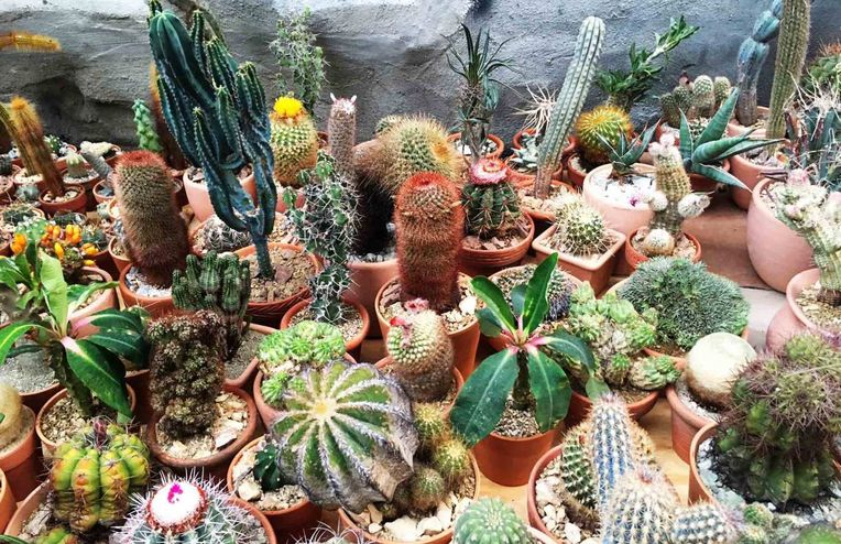 4 Easy Rules to Keep Your Cactus Happy & Thriving