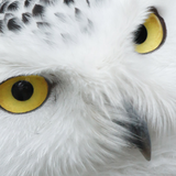 WiseOwl13