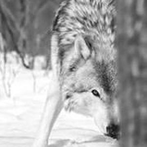 Melinda Wolf