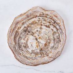 Petrified Wood Serving Board