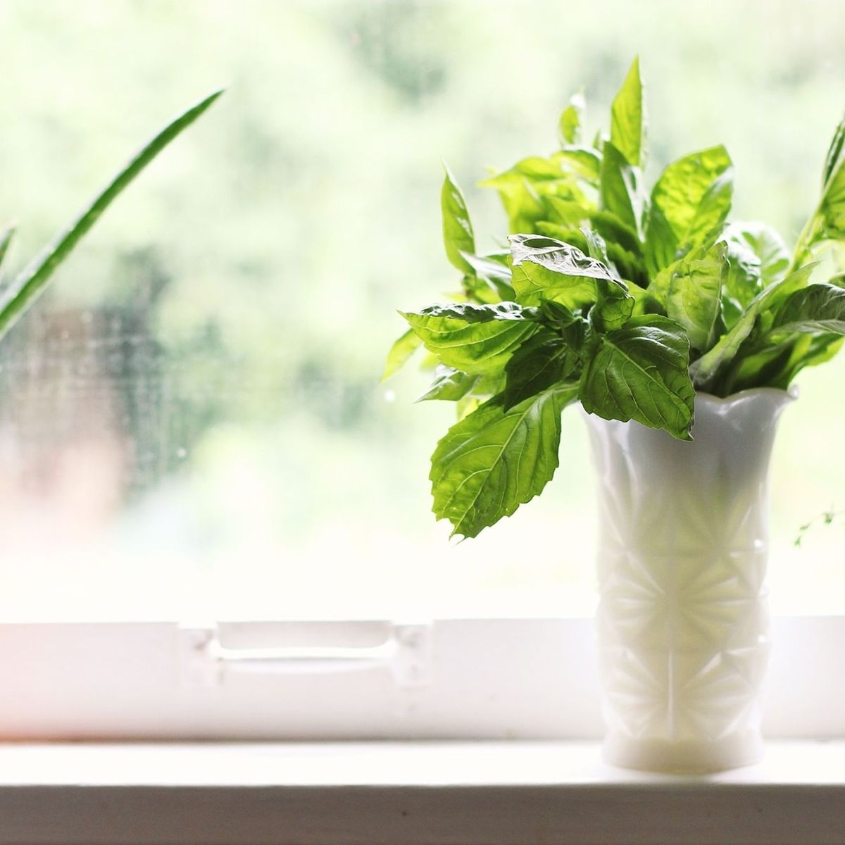 How to Actually Use Up an Entire Bunch of Basil in 1 Week