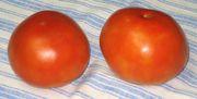 E93b7fde d172 4fe4 b9fe 8a932ab1cbbc  firts tomato 007