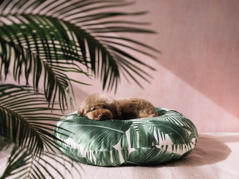 13 perfect dog beds for your 4 legged bff