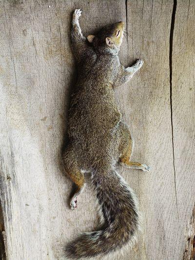 57dc5cae 686a 4125 9cdc 0de2c3d54b1b  GatherWoodOne 311100 The Case for Cooking Squirrel (Again)