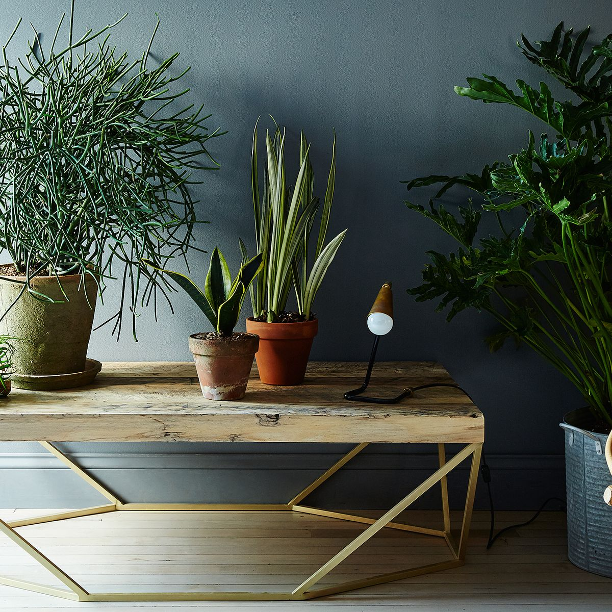 House Plant Care Guide - How to Take Care of Indoor Plants