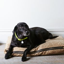 440d8720 b182 4711 bbf4 6ddba7fb8fff  2016 0106 how to make a dog bed rocky luten 5567