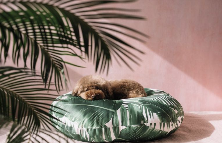 13 Perfect Dog Beds for Your 4-Legged BFF