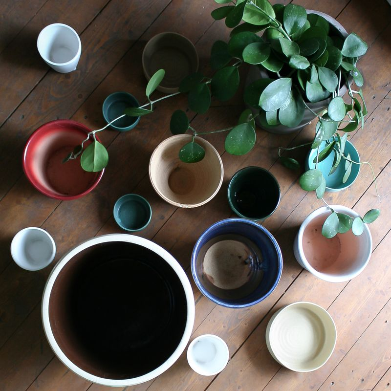 Potting up might just mean choosing a pot that's one inch larger that your plant's current home.