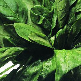 915c307a a486 4543 883a e97e15877bb1  spinach