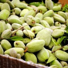 Fresh Almond Salad