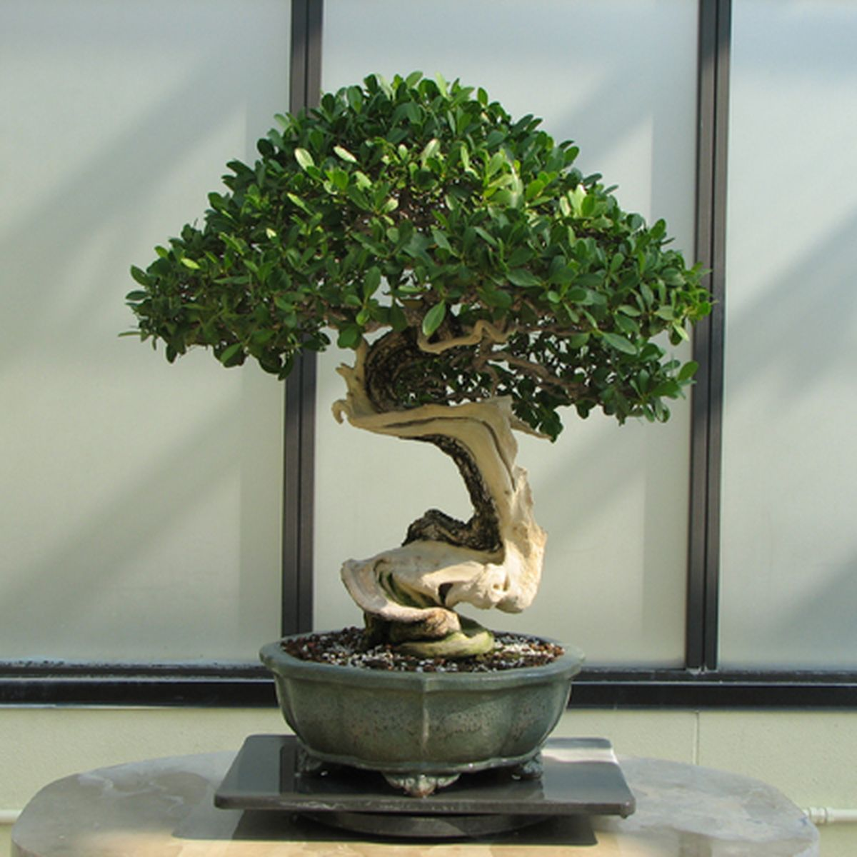 Bonsai Tree Care Guide For Beginners How To Grow A Bonsai Plant