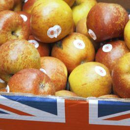 0cf564c4 8796 4563 86a4 051fcadd1b5a  apples