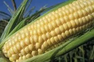 A81956ce 33ac 43d4 a602 2cef1860c407  corn