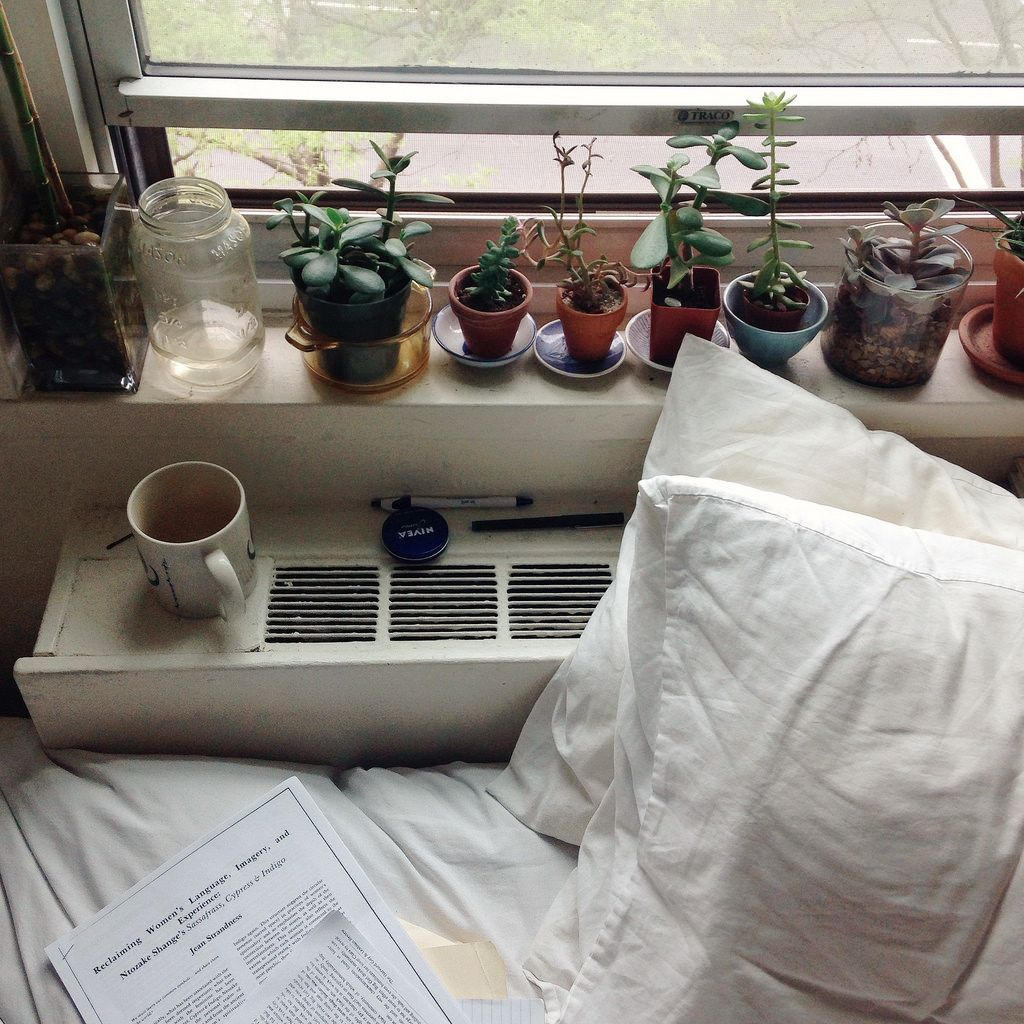 dorm plants