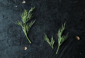 Dill and How to Use It from Stem to Seed