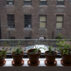 Help Us Save Our Windowsill Herb Garden
