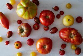 007efdb8 f10f 4211 8b53 4805b042681f  2013 0730 contest theme tomatoes 006