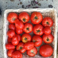 Roasted Tomato Eggplant Melts