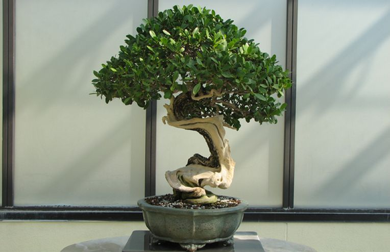 How to Care for a Bonsai Tree & Make It Live Forever