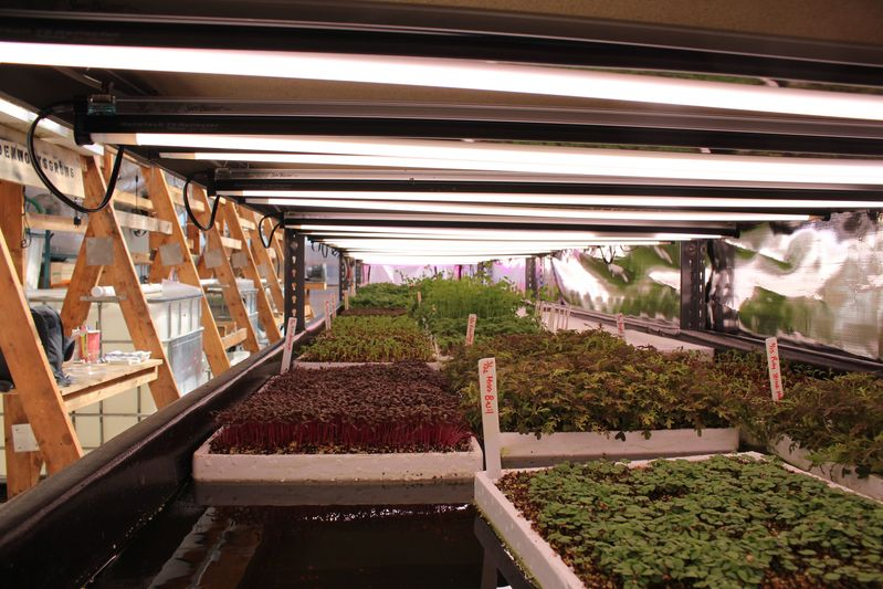 LED lights over several of Edenworks's crops, including micro-basil in the foreground