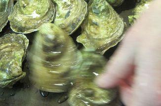 3da89e19 7b66 490f b98e 80cb19cca9c8  oyster