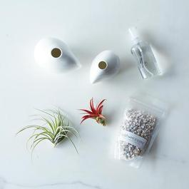 Airplant & Pebble Vase Set