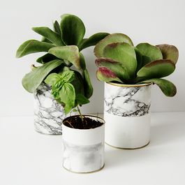 How to Make a Beautiful Marble Planter at Home