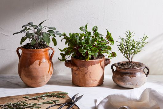 Calling All Plant Parents: 6 Resolutions to Make for 2021